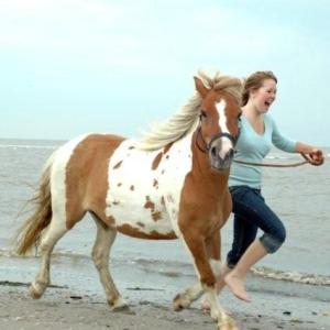 ponys-aan-zee-2008-12